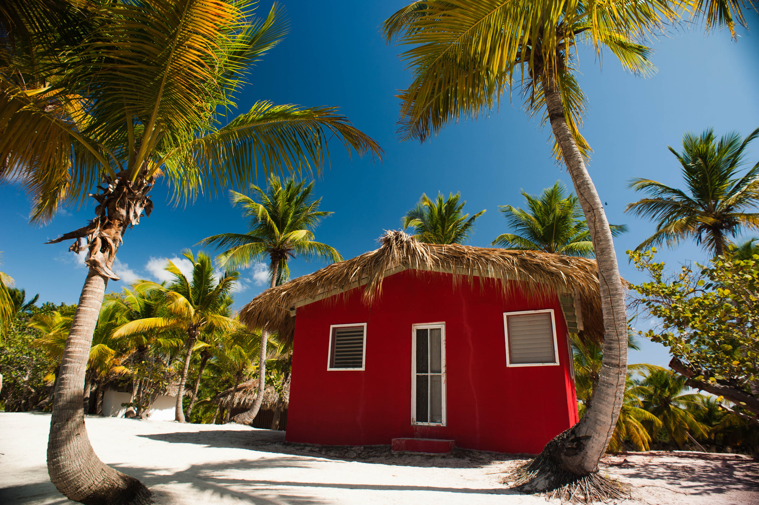 Catalina Island, La Romana, Dominican Republic. A typical bungalow nearby cost line, shaded with palm trees (landscape).