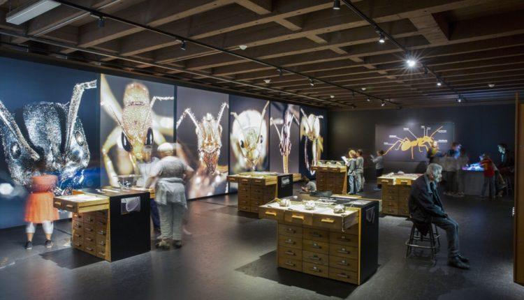جنيف- متحف التاريخ الطبيعي